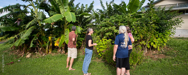 Designing homegarden agroforest, Hawaii