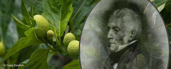 "Archibald Menzies, one of the first European botanists to study the agricultural systems of Kona, Hawai'i, remarked in 1793 that, ""...the fields are productive of good crops that far exceed in point of perfection the produce of any civilized country within the tropics."""